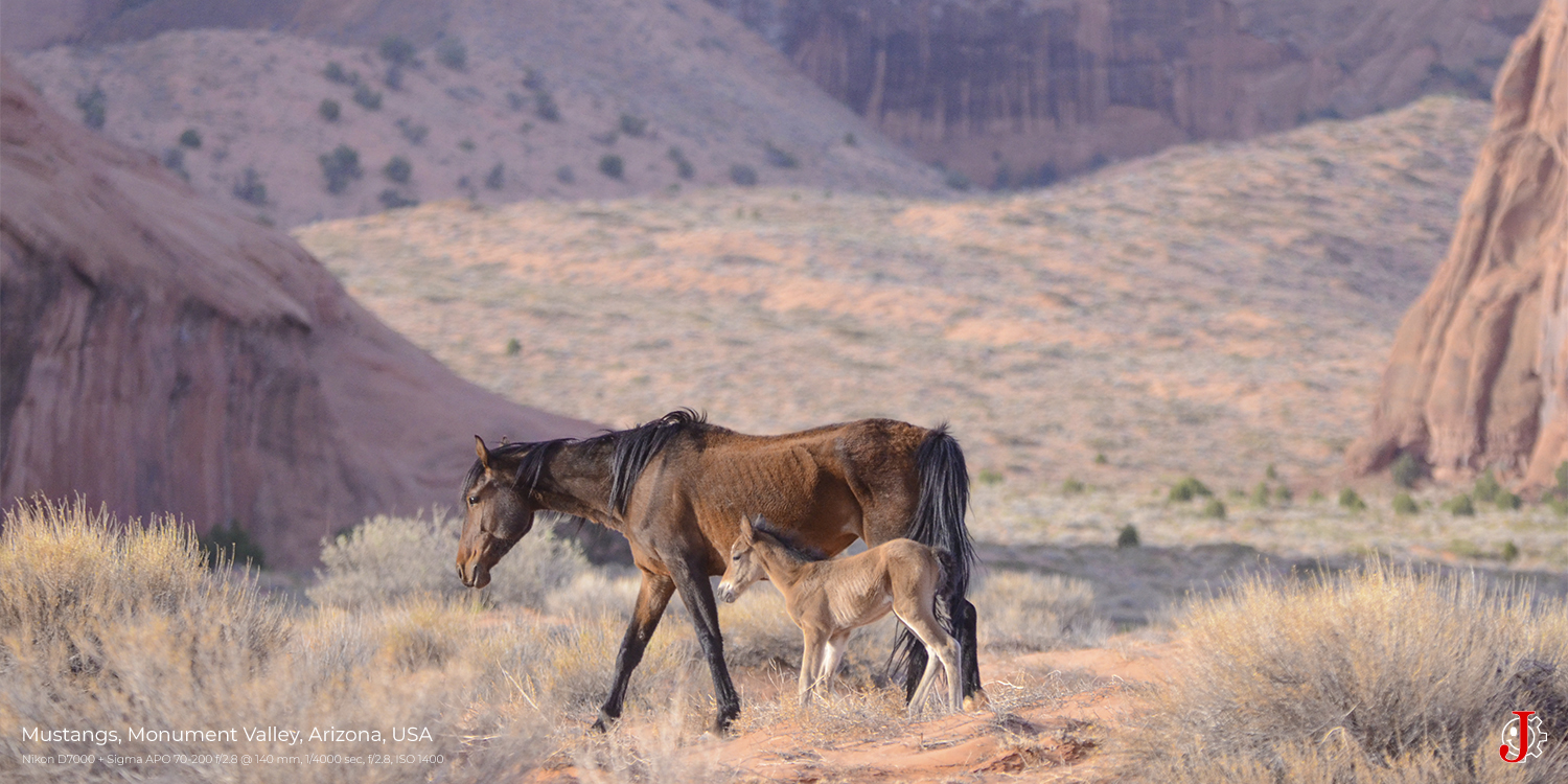 Mustangs, Monument Valley