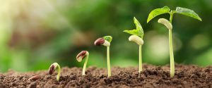 SustainableX seedlings